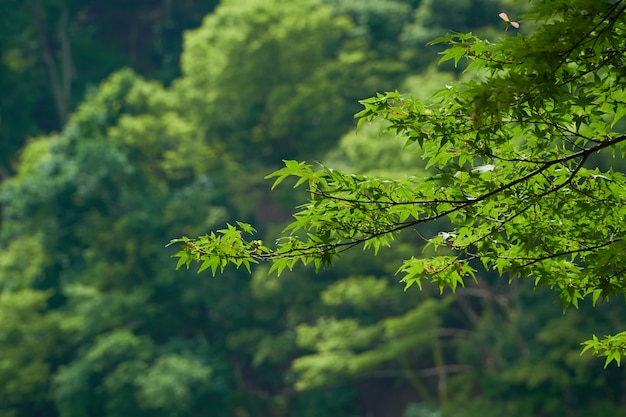 Green leaves on the tree in the sky Premium Photo