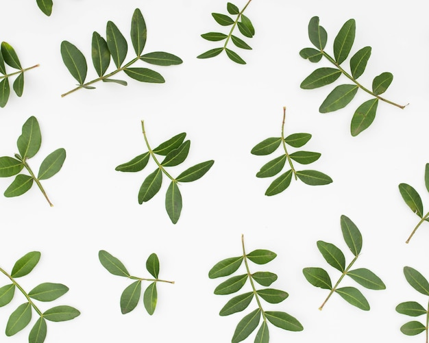 Green leaves twig isolated on white background Free Photo