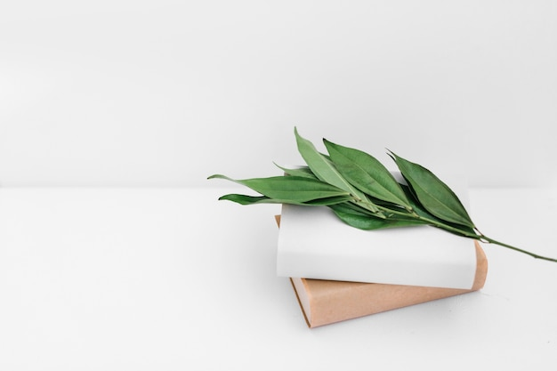 Green leaves twig with two books on white backdrop Free Photo