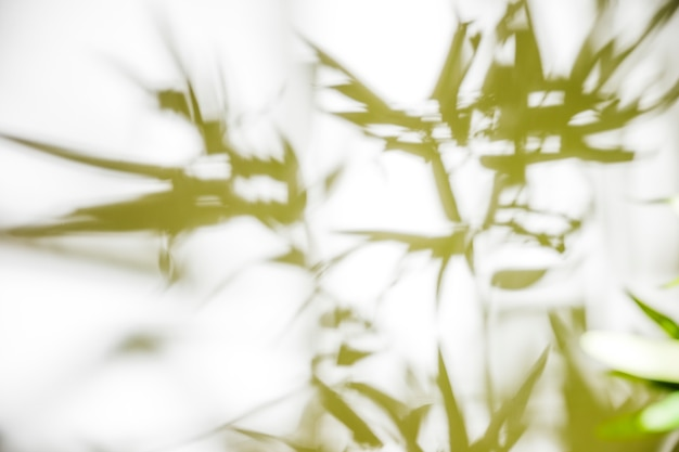 Green leaves on white background Free Photo
