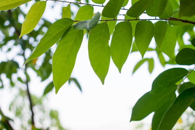 Green leaves with natural blurred background Premium Photo