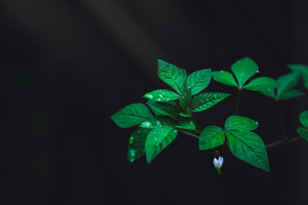 Green leaves with rain drops growing in the wild forest on dark background Premium Photo