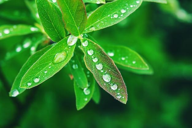 雨上がりの水滴と緑の葉 Premium写真