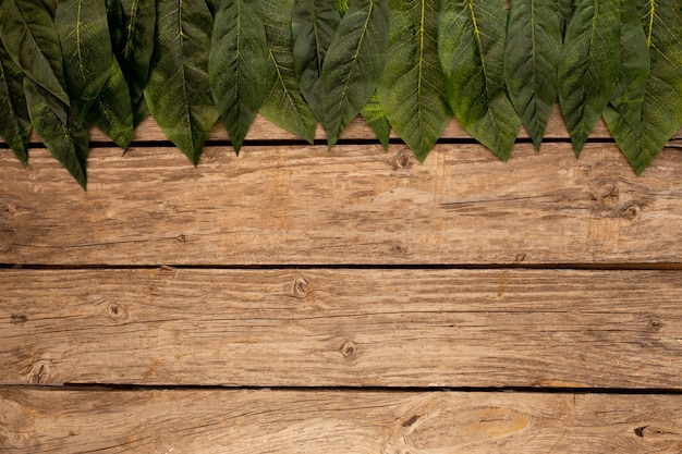 Green leaves  a wooden brown background Free Photo