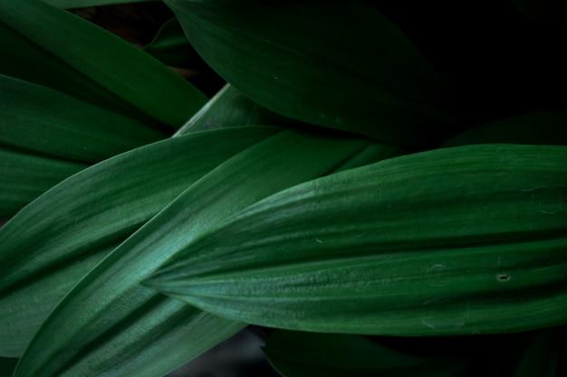 The green leaves Premium Photo