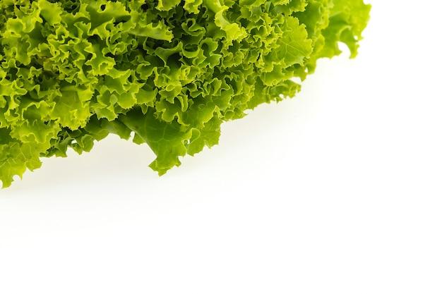Green lettuce Free Photo