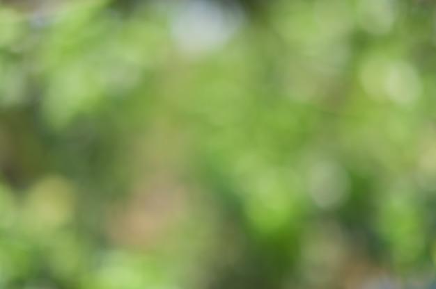 Зеленый свет боке от естественного света Premium Фотографии