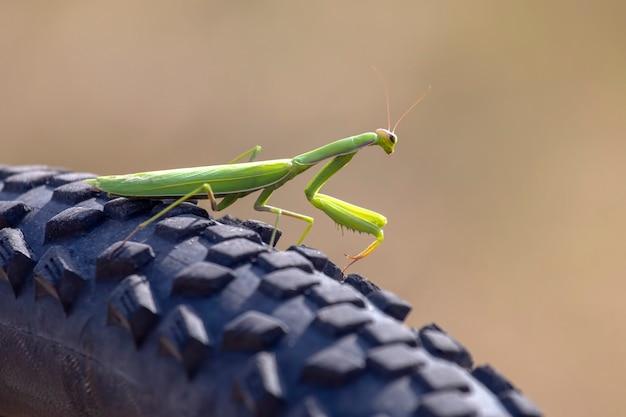 Зеленый богомол на велосипеде крупным планом Premium Фотографии