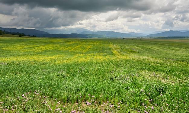 山と山の雲を背景に黄色の花と緑の牧草地。アルタイ Premium写真