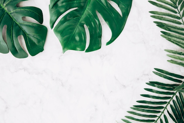 Green monstera and palm leaves on marble textured backdrop Free Photo