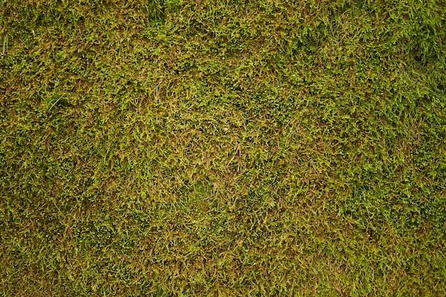 緑の苔の背景 Premium写真