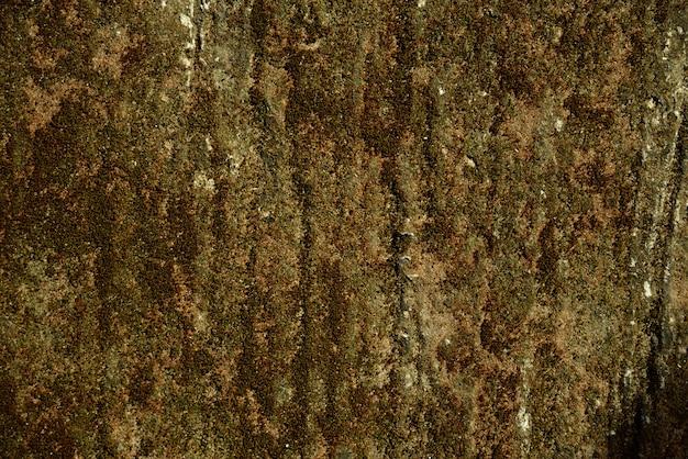 Green moss dry background Premium Photo