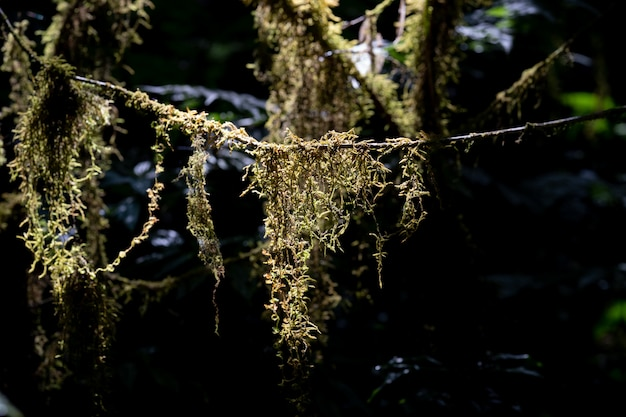 Green moss in the forest, overgrown over trunks Premium Photo