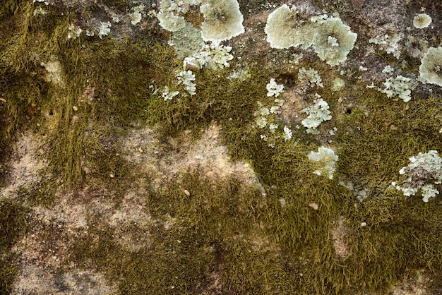 Green moss and mold on texture and background Premium Photo
