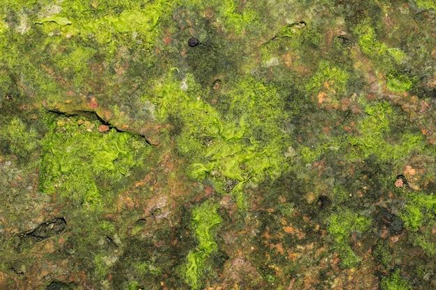 돌 질감에 녹색 이끼 프리미엄 사진