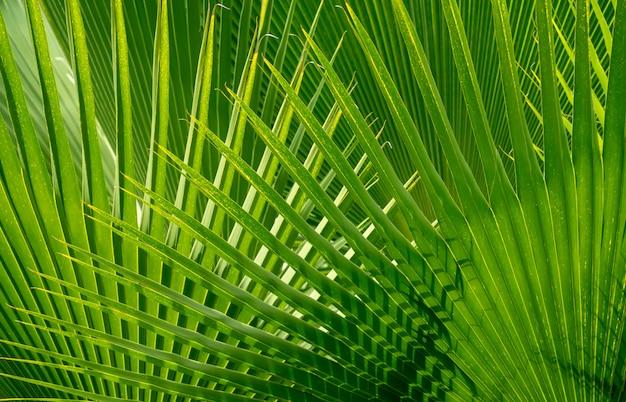 緑の自然な風合いの背景。 Premium写真