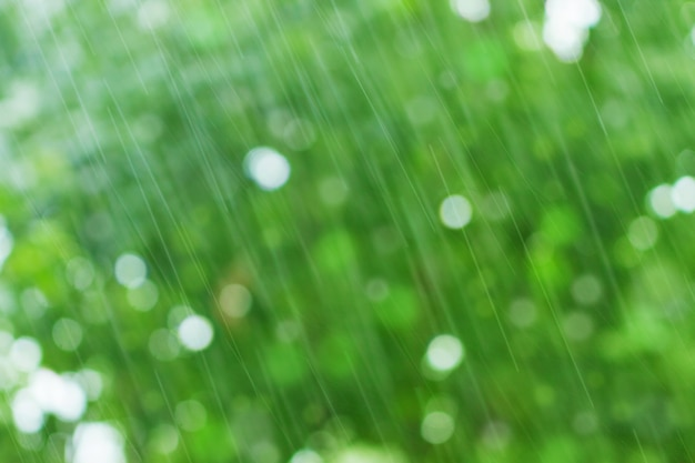 Green nature background with raindrops Premium Photo