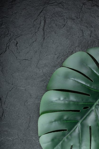 Green nature brunch of leaf on black. Free Photo
