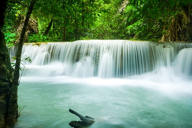 Green nature with green waterfall landscape Premium Photo