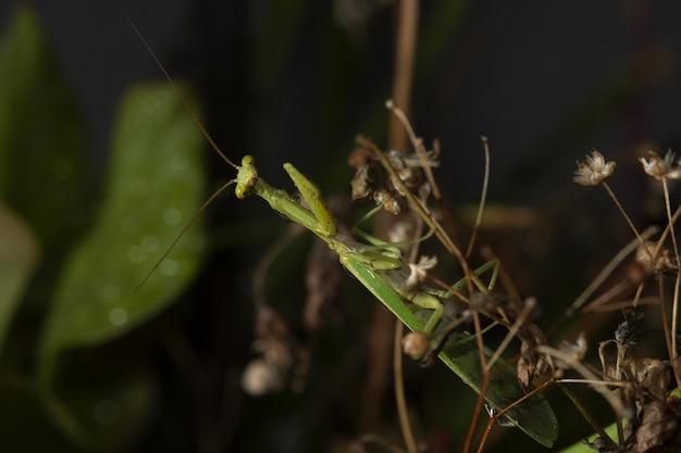 自然環境における緑色の翼を持つ昆虫 無料写真