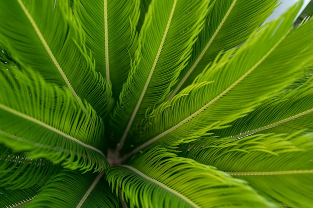 Foglie di palma verdi pattern di sfondo, sfondo naturale e carta da parati Foto Gratuite