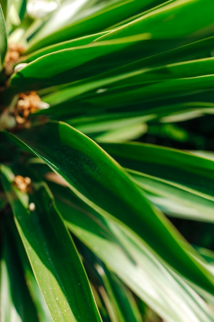 Green palm leaves under the rays of the sun Premium Photo