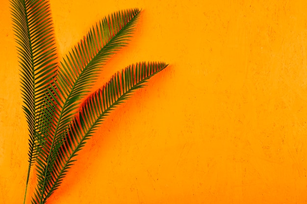 Green palm leaves with coral shadow against yellow textured background Free Photo