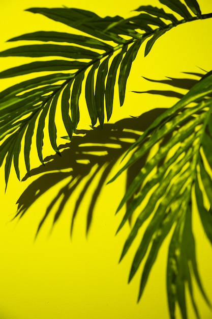 Green palm leaves on yellow background Free Photo