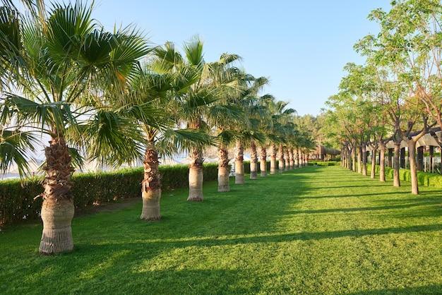 Зеленый пальмовый парк и их тени на траве. Бесплатные Фотографии
