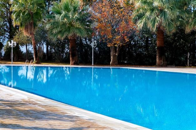 Зеленые пальмы у бассейна с лазурной водой рядом с желтеющим осенним деревом Premium Фотографии