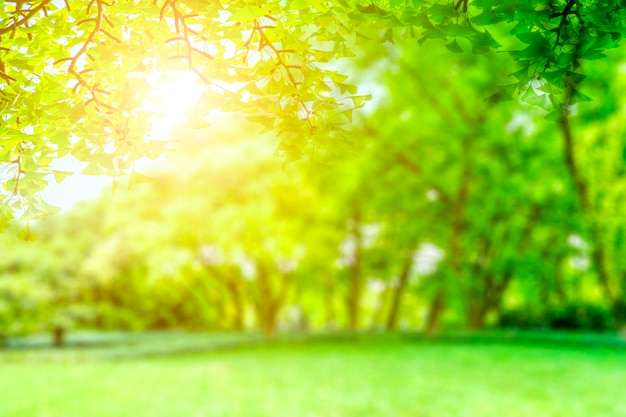 Green park view Free Photo