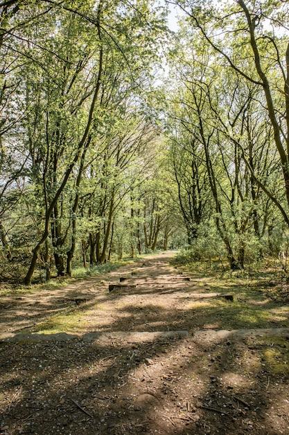 晴れた日には木々が生い茂る緑豊かな公園 無料写真