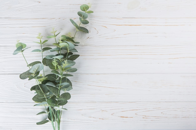 Green plant branches on white table Free Photo
