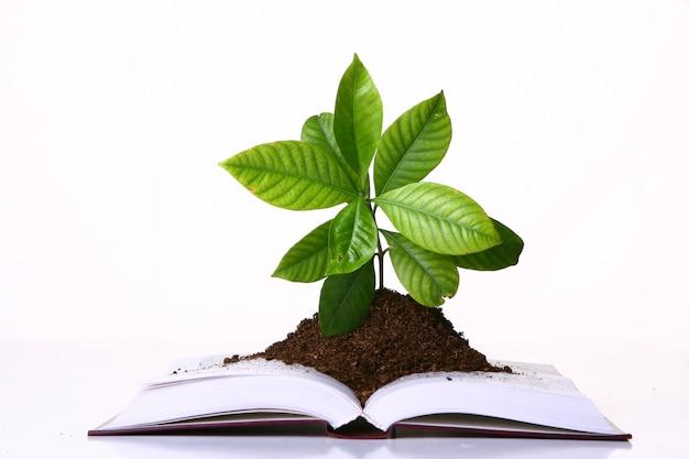 Зеленое растение растет на страницах книги Бесплатные Фотографии
