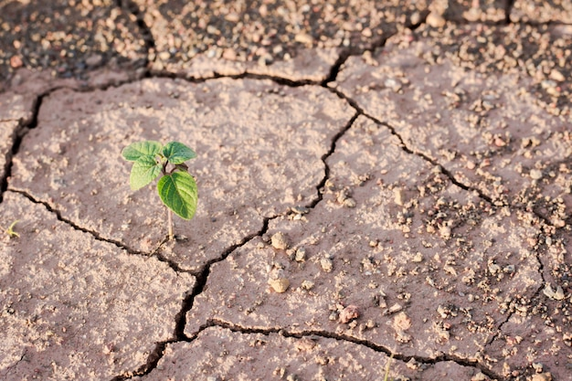 Green plant growing out of cracks in the earth Premium Photo