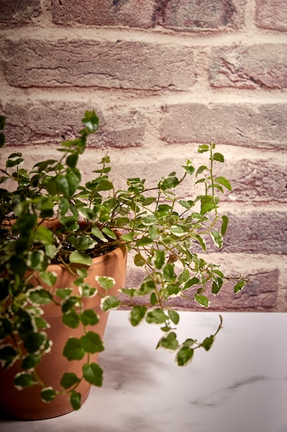 Green plant in a terracotta pot with a background of reddish bricks Premium Photo