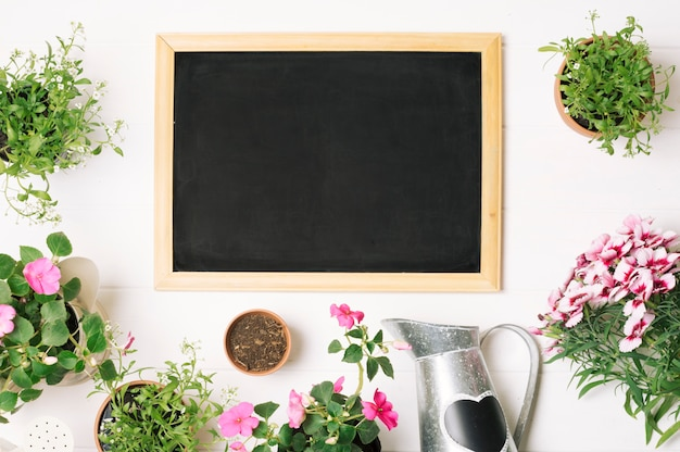 Green plants and blackboard in layout Free Photo