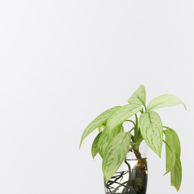 Green plants in water vase Free Photo