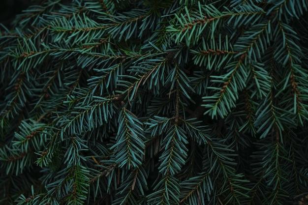 毛皮や松の緑のとげのある枝 Premium写真