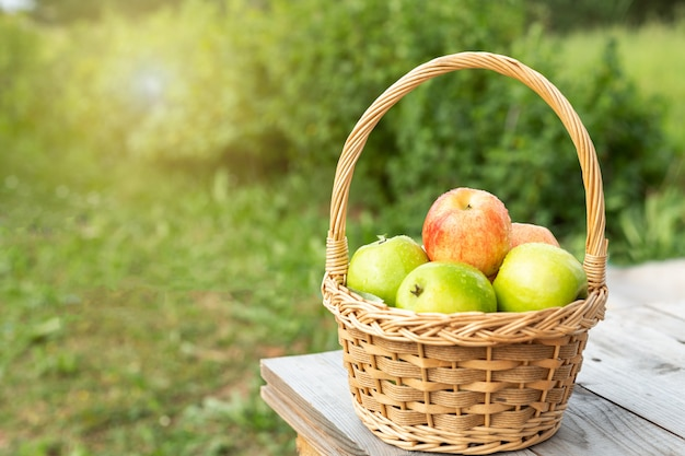 Green and red apples in wicker basket on wooden table green grass in the garden harvest time sun flare Premium Photo
