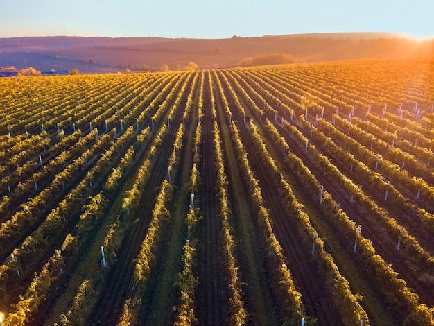 Righe verdi e rosse della vigna al tramonto in moldova, sole arancione brillante Foto Gratuite