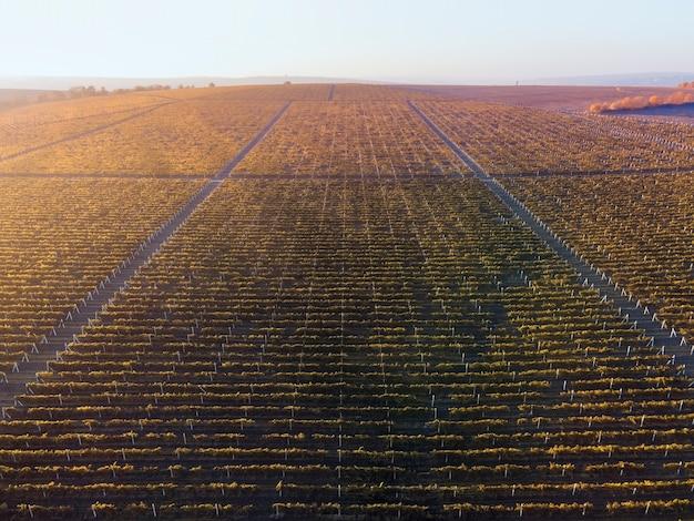 Righe verdi e rosse della vigna al tramonto in moldova Foto Gratuite
