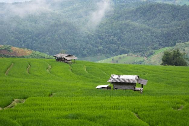 Ban pa phong pieng chiang maiタイで霧がある山の上に緑の田んぼ。 Premium写真