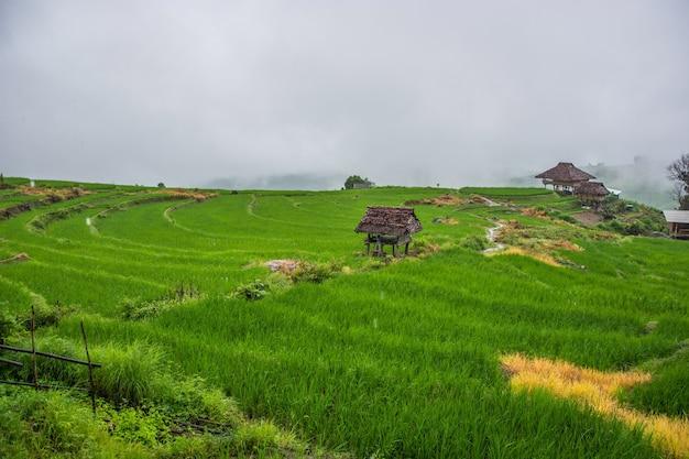Ban pa phong pieng chiang maiタイで霧のある緑の田んぼ。 Premium写真