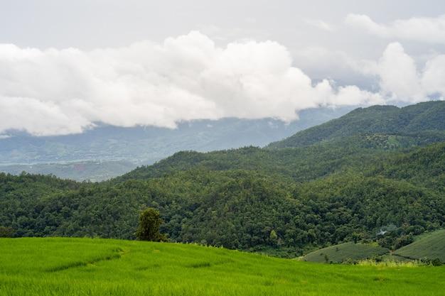 Поле террасы зеленого риса против горного пейзажа. Premium Фотографии