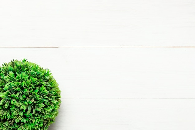Green round bush on white background Free Photo