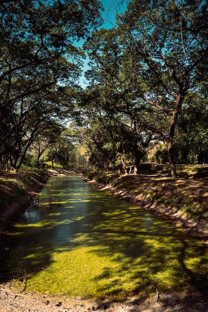 アジアの南東にある自然の川に落ちる葉っぱの木々のある春の森の緑の風景。タイの近代自然とクリーンな環境の生態資源。 Premium写真