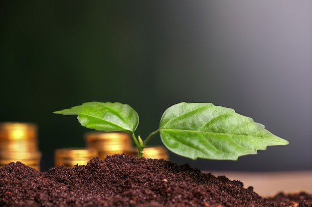 Green seedling growing from coins in the soil. Premium Photo