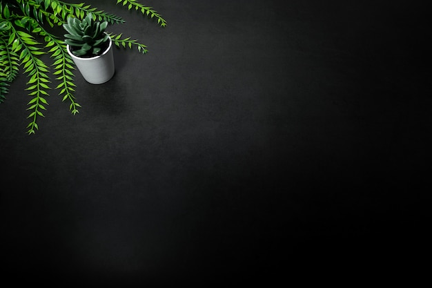 Green small tree and green leaf against empty dark background Premium Photo
