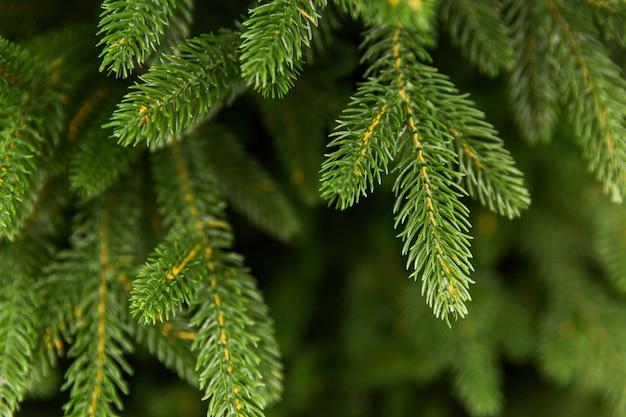 緑のスプルース枝。クリスマスツリー。緑の針。新年の準備 Premium写真